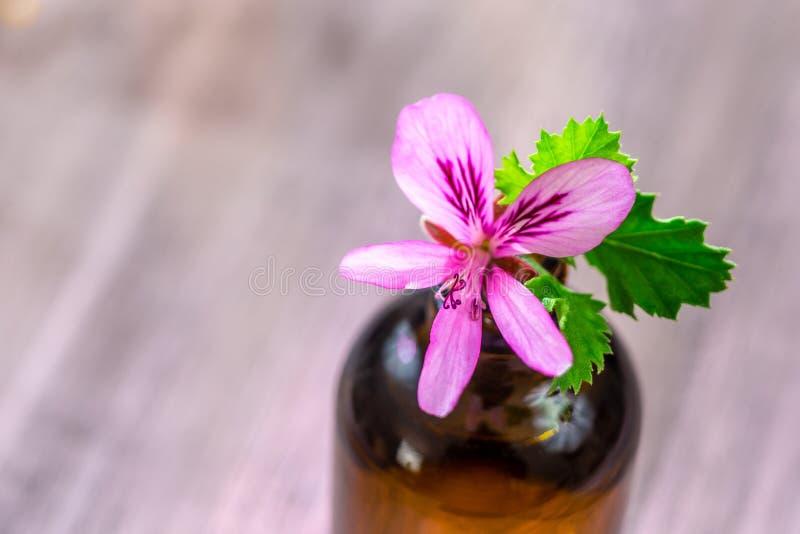 Extrato do óleo essencial do gerânio, infusão, remédio, recipiente da tintura no fundo de madeira imagem de stock royalty free