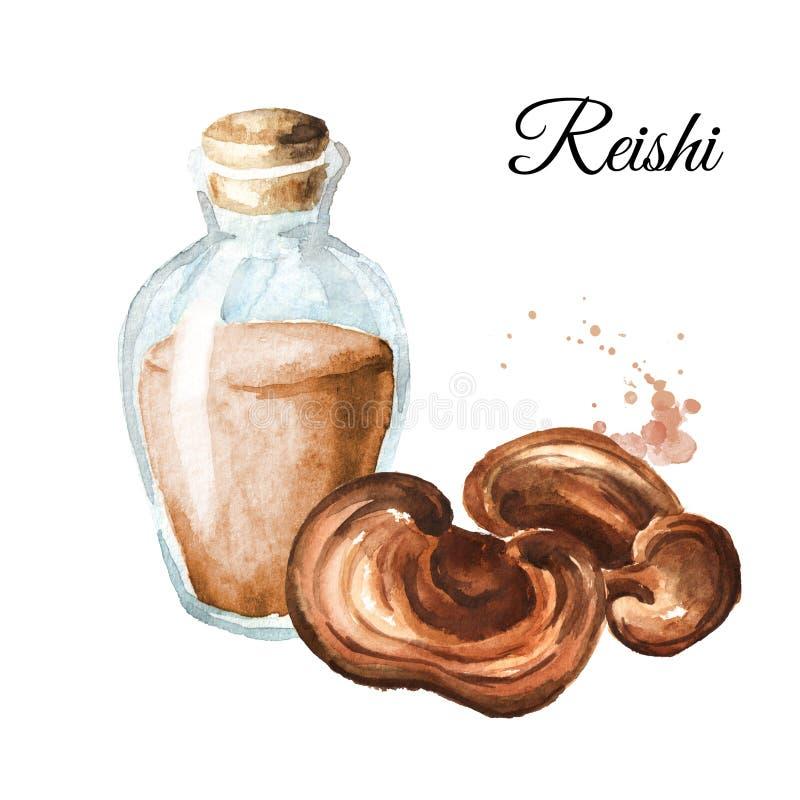 Extrato do fitoterapia do cogumelo secado do reishi do lingzhi Ilustração tirada mão da aquarela, isolada no fundo branco ilustração royalty free