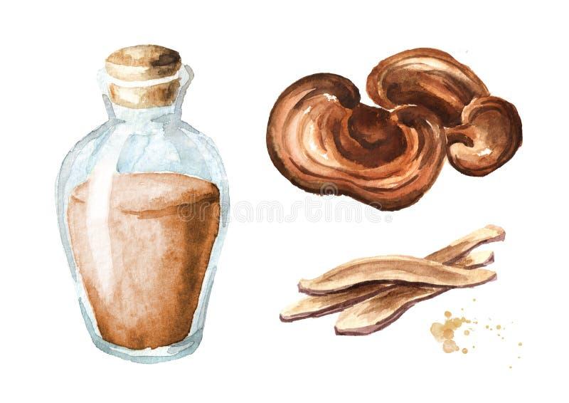 Extrato erval do grupo secado do cogumelo do reishi do lingzhi Ilustração tirada mão da aquarela, isolada no fundo branco ilustração royalty free