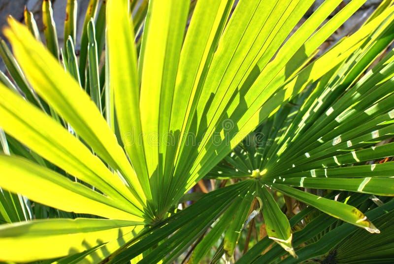 Extravagância verde foto de stock royalty free