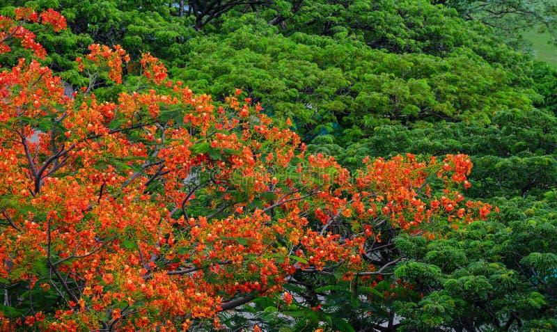 Extravagante Bäume und Blumen Phoenix lizenzfreie stockfotos