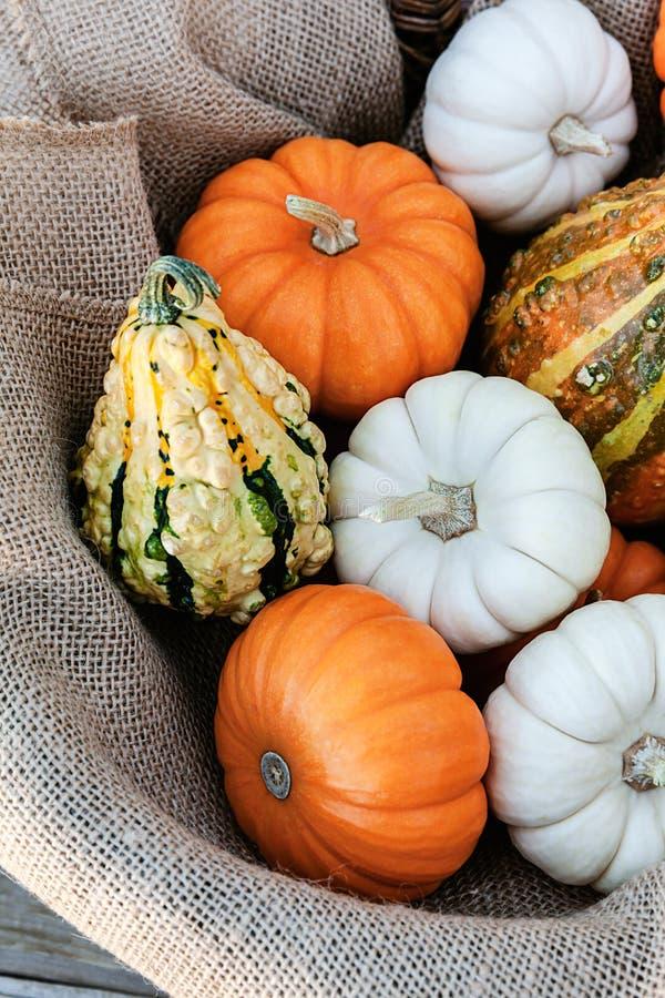 Extrem closeup av pumpor som samlas för tacksägelsedagen, säsongferiebegrepp arkivbild