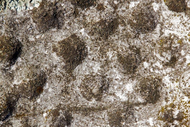 Extrem Closeuptextur av lavsvampen och mossa arkivfoton