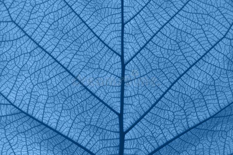 Extrem enge Textur der blauen Blattvenen stockfotografie