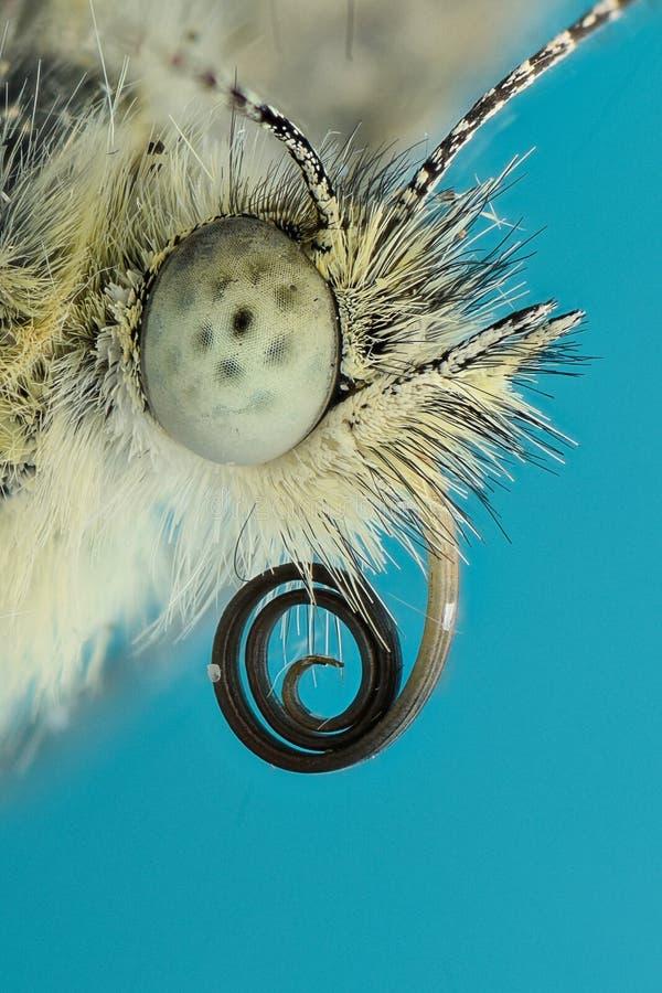 Extrem förstoring - fjärilshuvud royaltyfri bild
