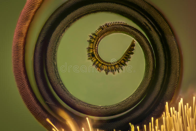 Extrem förstoring - fjärilssnabel under mikroskopet fotografering för bildbyråer