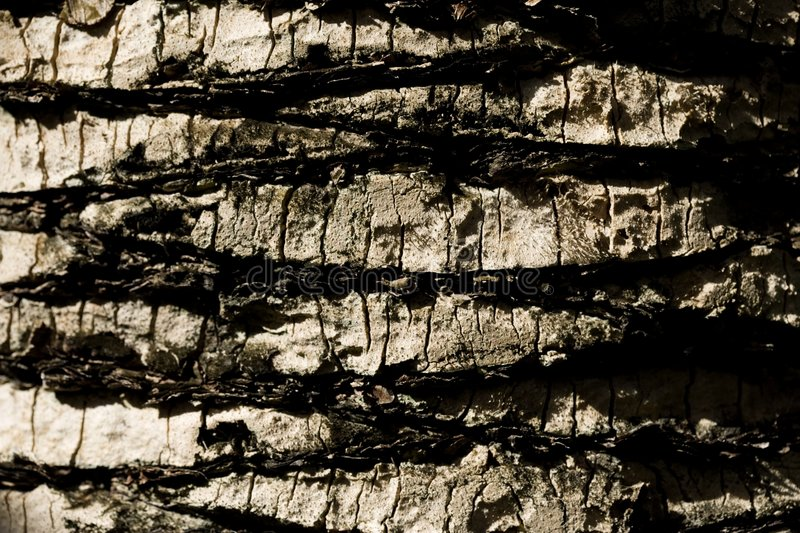 Extreme Close-up On The Bark Tree Stock Photography