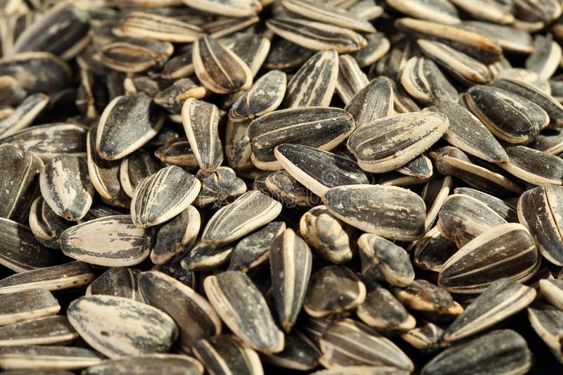 Extreme close up of freshly roasted and salted non-oilseed sunflower seeds confections. stock photos