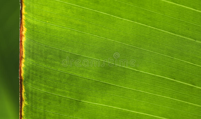 Extreme close up of green leaf