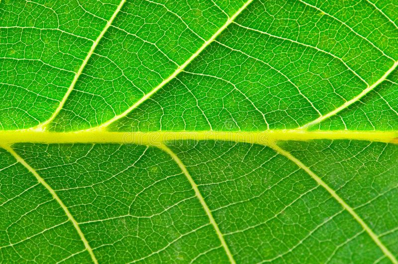 Download Extreme Close Up Of Green Leave Stock Image - Image: 6781149