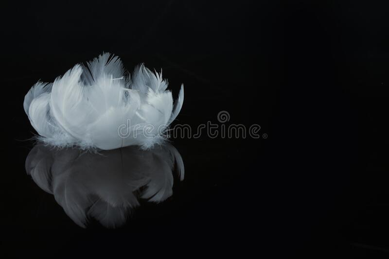 An extreme close-up and macro photograph of feathers royalty free stock photo