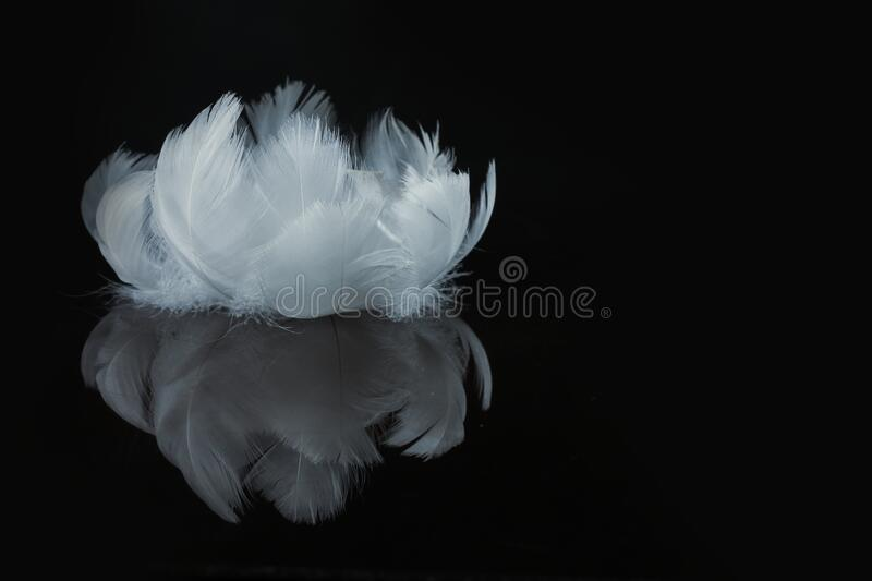 An extreme close-up and macro photograph of feathers royalty free stock photos