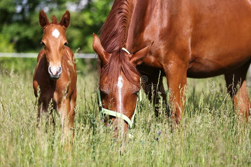 Extreme closeup mother horse and her newborn foal royalty free stock photos