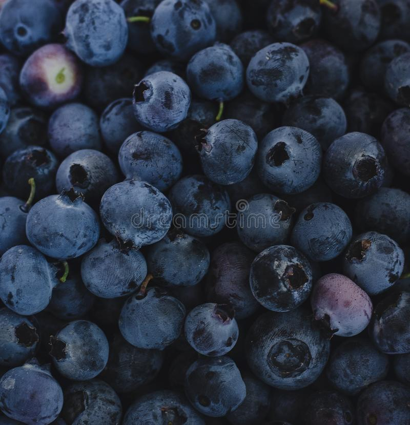 Extreme closeup of a pile of fresh blueberries royalty free stock photo