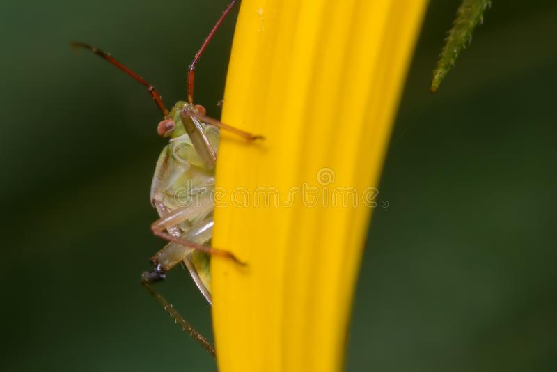 Extreme closeup portrait of what appears to be a species of stink bug - insect taken in Minnesota stock photo
