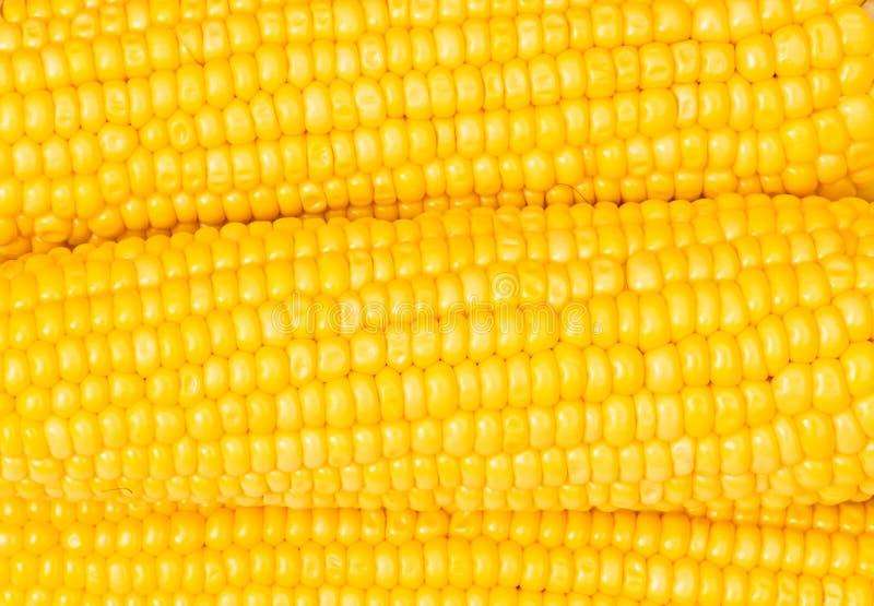 Extreme dichte omhooggaand van geel graan royalty-vrije stock afbeeldingen