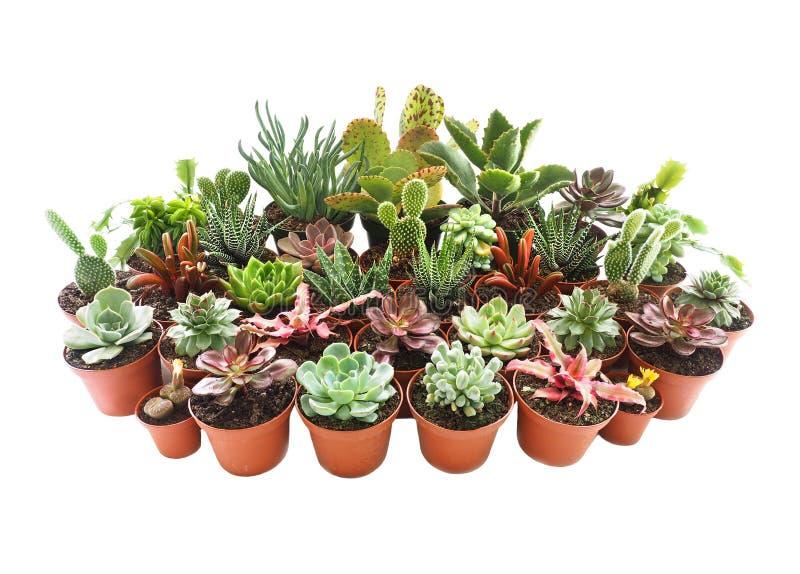 Extreme Diepte van Gebiedsfoto van Succulents en Cactus Geïsoleerd o stock foto's