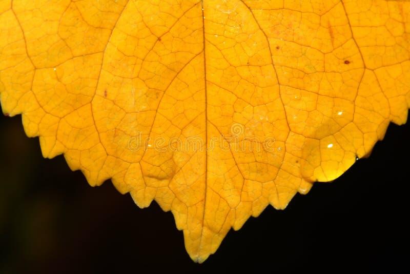 Extreme macro of autumn leaf stock image