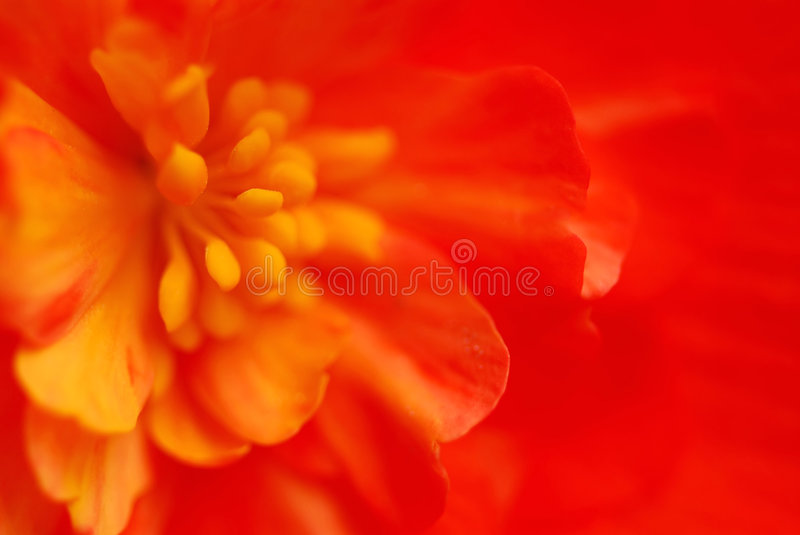 Extreme macro flower royalty free stock image