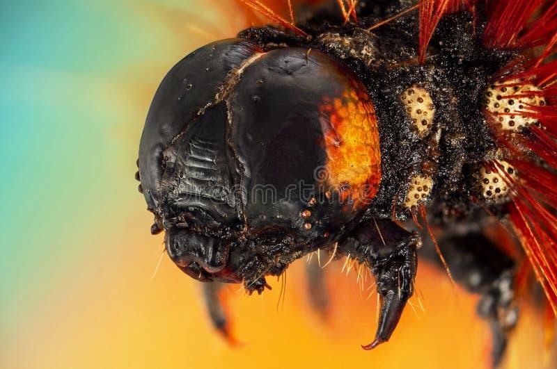 Extreme macro portrait of caterpillar royalty free stock photos