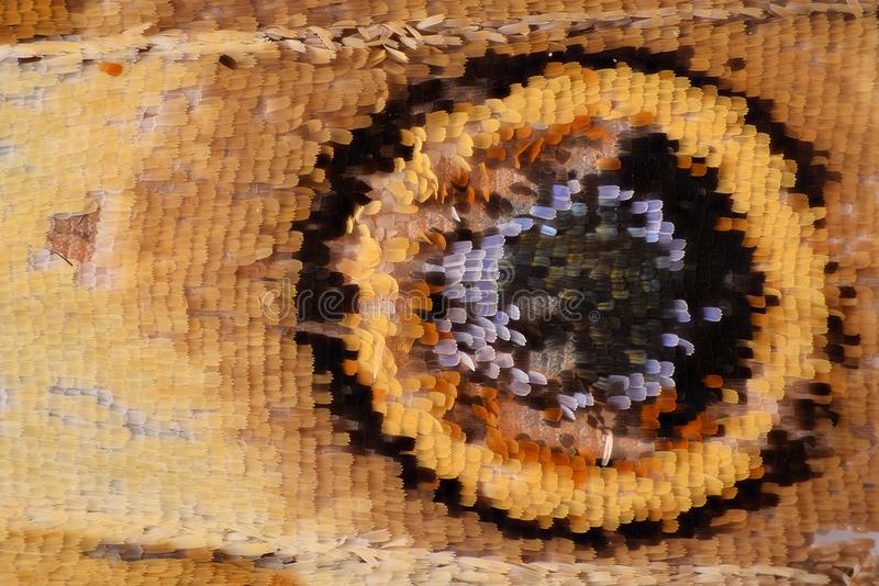 Extreme magnification - Red admiral butterfly wing scales, Vanessa atalanta royalty free stock images