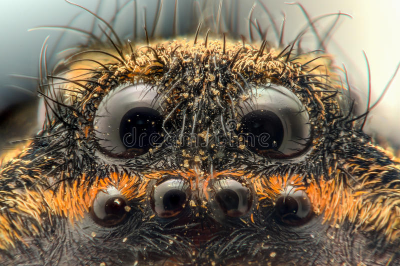Extreme magnification - Wolf Spider, eyes. 5x stock images