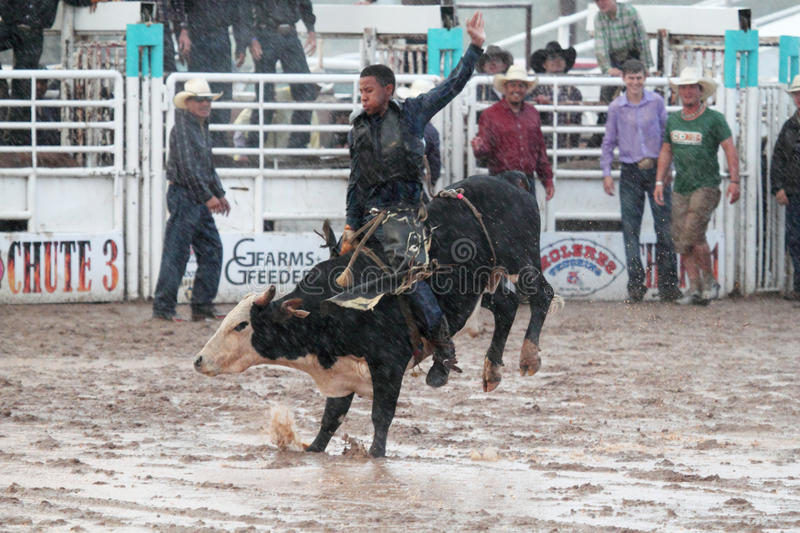 Download Extreme Rodeo editorial image. Image of muddy, bull, belen - 25923600