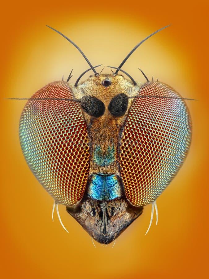 Extreme scharfe und ausführliche Studie der 2mm Fliege stockbilder