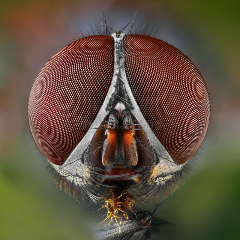 Download Extreme Sharp And Detailed Study Of Fly Stock Photo - Image: 23505886