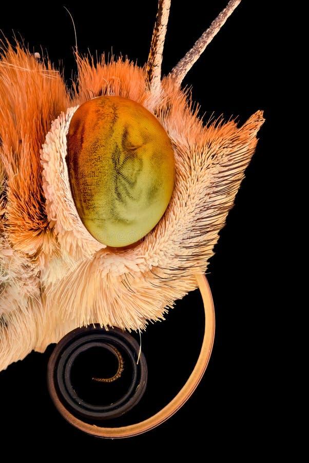 Extreme vergroting - Vlinderhoofd stock afbeeldingen
