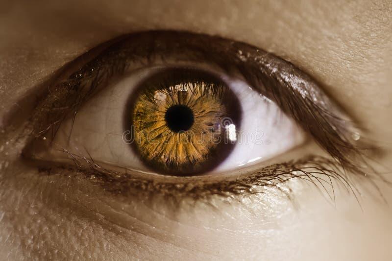 Extremes Makro eines braunen Auges stockbild