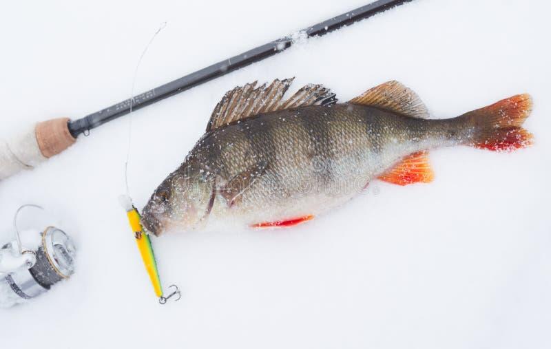 Extremes Winterfischen lizenzfreie stockfotos