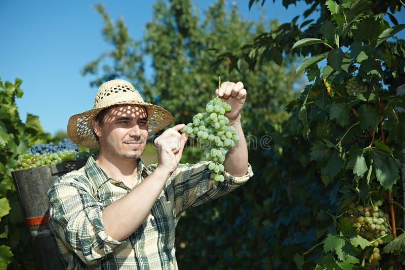Extremidade desgastando de Vintager completamente das uvas foto de stock royalty free