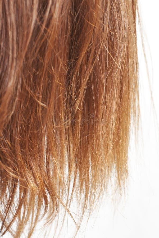 Extremos del pelo de la castaña en blanco imágenes de archivo libres de regalías