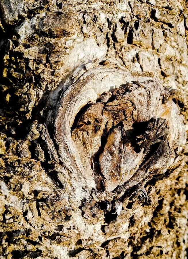 Eye†‹of†‹Tree†‹ στοκ εικόνες