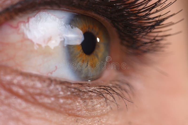 Download Eye stock photo. Image of lash, closeup, cosmetic, care - 12555074