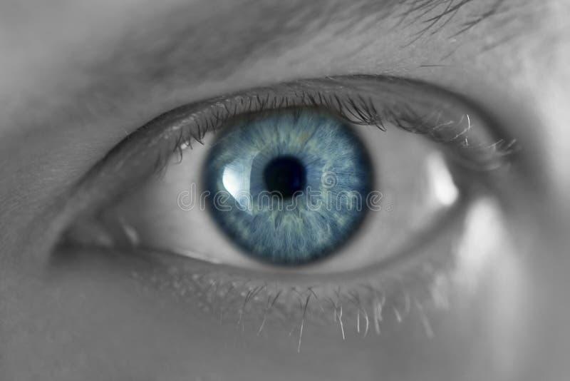 Download Eye stock image. Image of eyebrow, macro, pupil, clean - 12819433