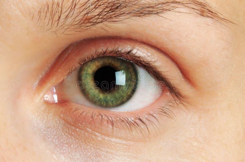 Eye. Macro photo of a green eye stock photo