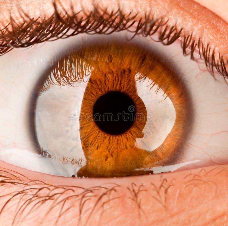 Eye. Beautiful Human eye close up royalty free stock photography