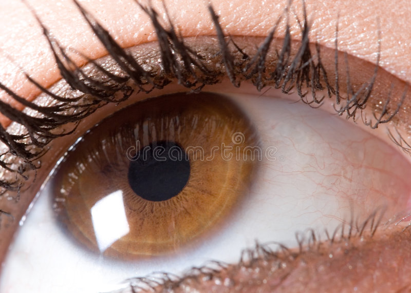 Download Eye Stock Photo - Image: 2101900