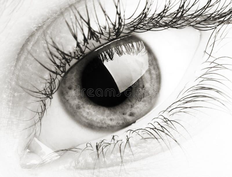 Download Eye stock image. Image of caucasian, eyelashes, eyed, keeker - 2556769