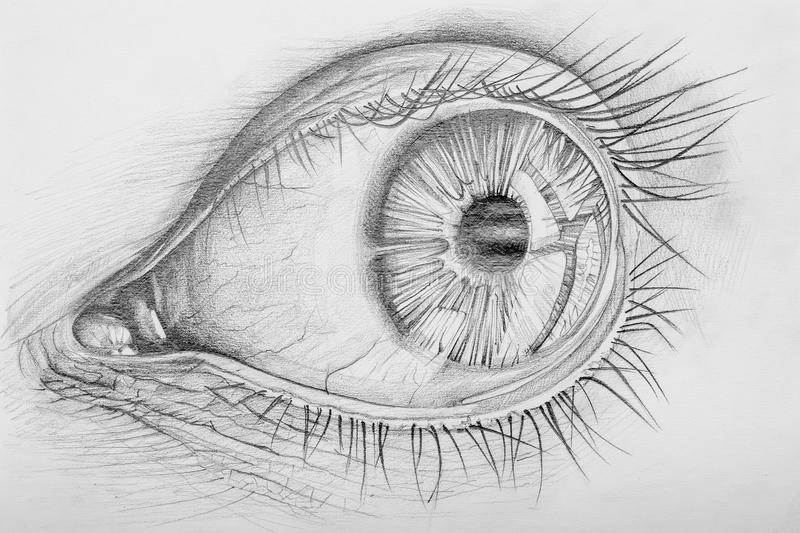 Eye. Pencil Drawn Anatomy Of A Human Eye royalty free illustration