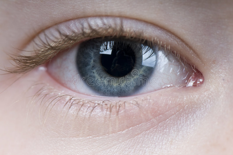 Download Eye stock image. Image of pupil, white, lash, iris, eyelid - 5505663