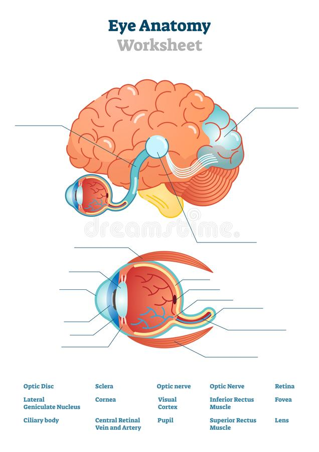 Eye anatomy blank worksheet, printable test illustrations vector illustration