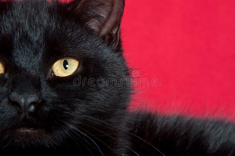 Eye of a black cat stock photo