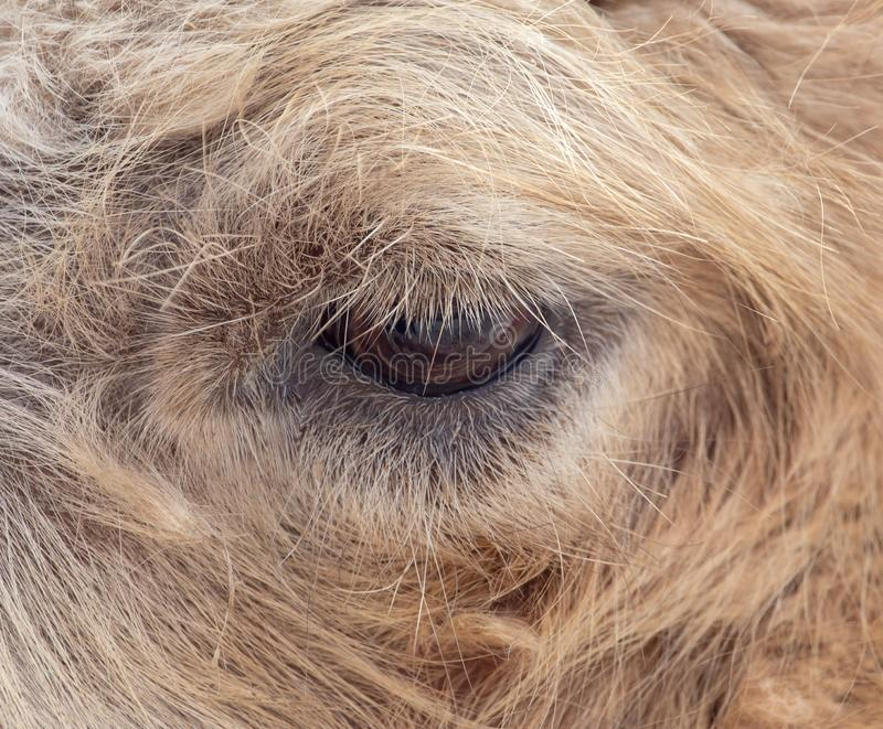 Eye of a camel in wool as background royalty free stock photo