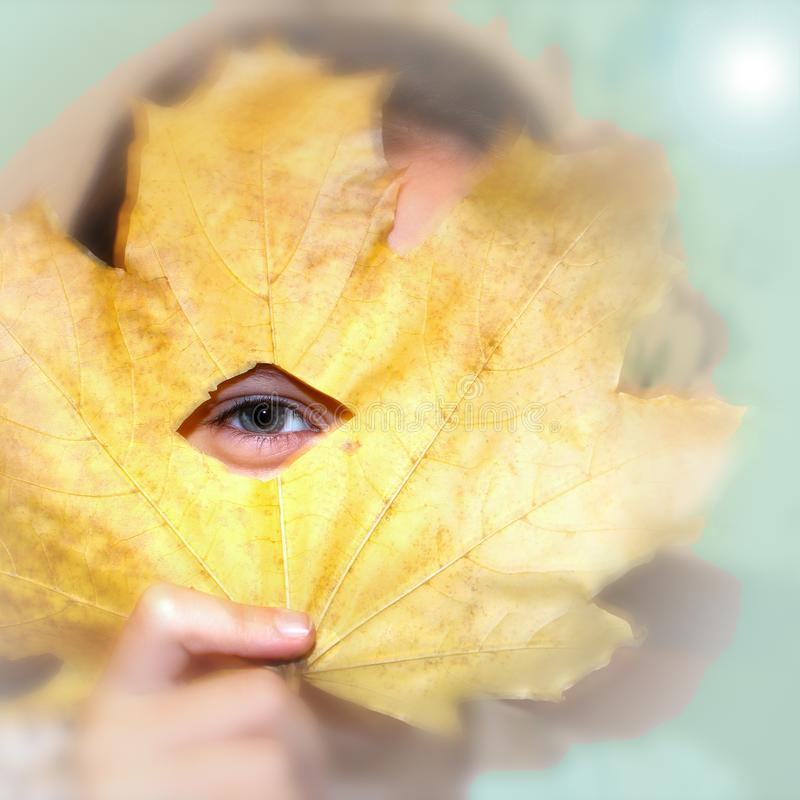 The eye of a cheerful child between parts of a yellow maple leaf, emotions on a sunny autumn day royalty free stock photos