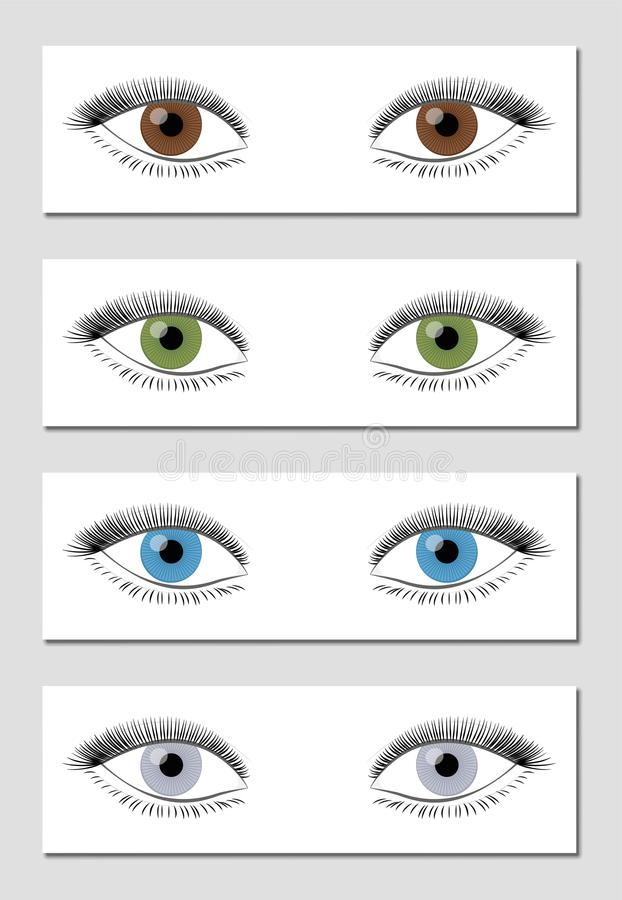 Download Eye Color Chart Brown Green Blue Gray Stock Vector - Illustration  of eyes, background