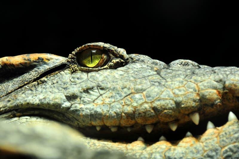 Download Eye Of The Crocodile Royalty Free Stock Image - Image: 6769986