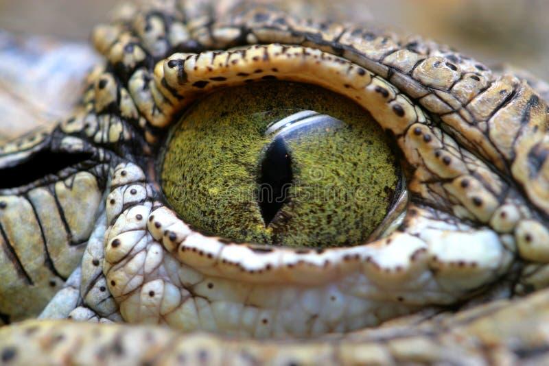 Eye of the crocodile stock photography